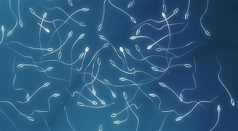 spermiogramma.png